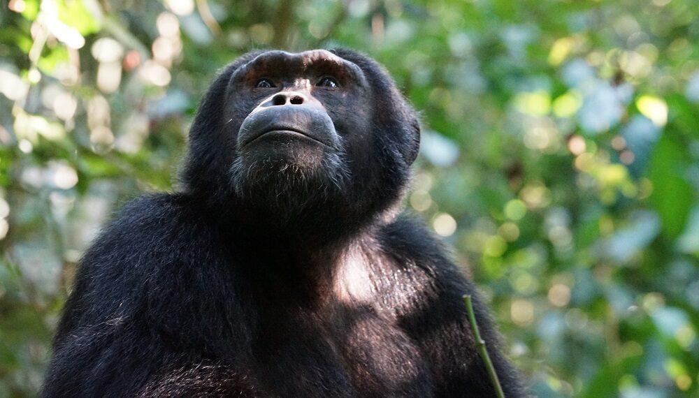 """Nuovo appello WWF: """"ricostruiamo il nostro rapporto con la Natura"""""""
