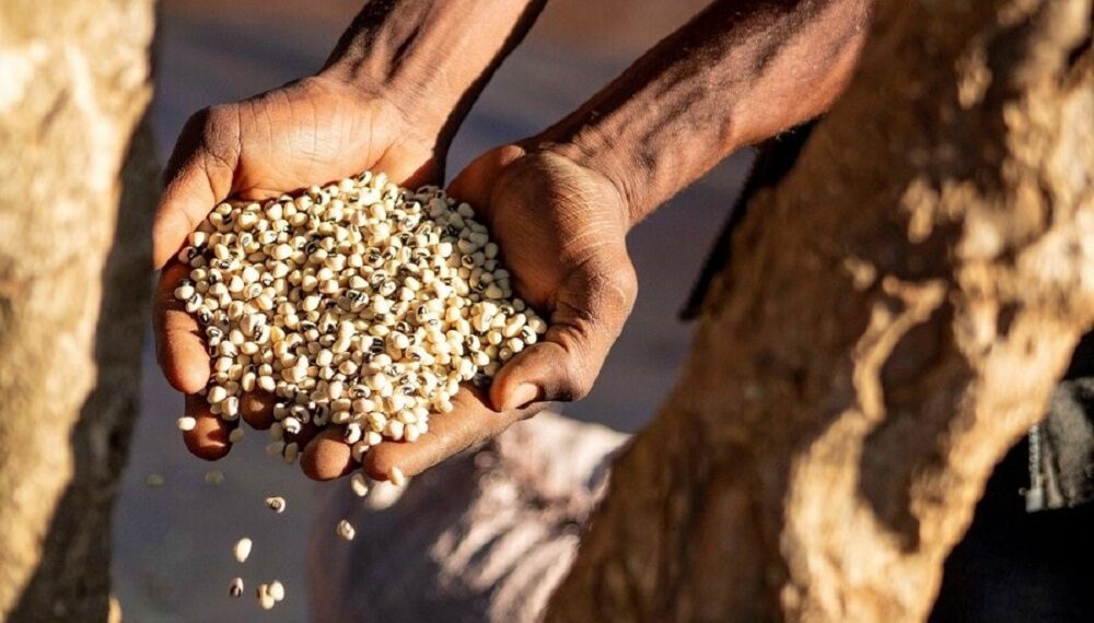 Zambia: la forza dei legumi e la nuova vita di Emeldah