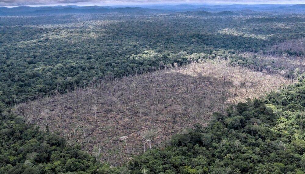 WWF, un rapporto e un video per fermare la deforestazione