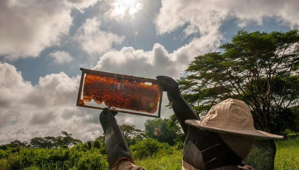 Api e arnie umanitarie, medicina per gli agricoltori del Kenia