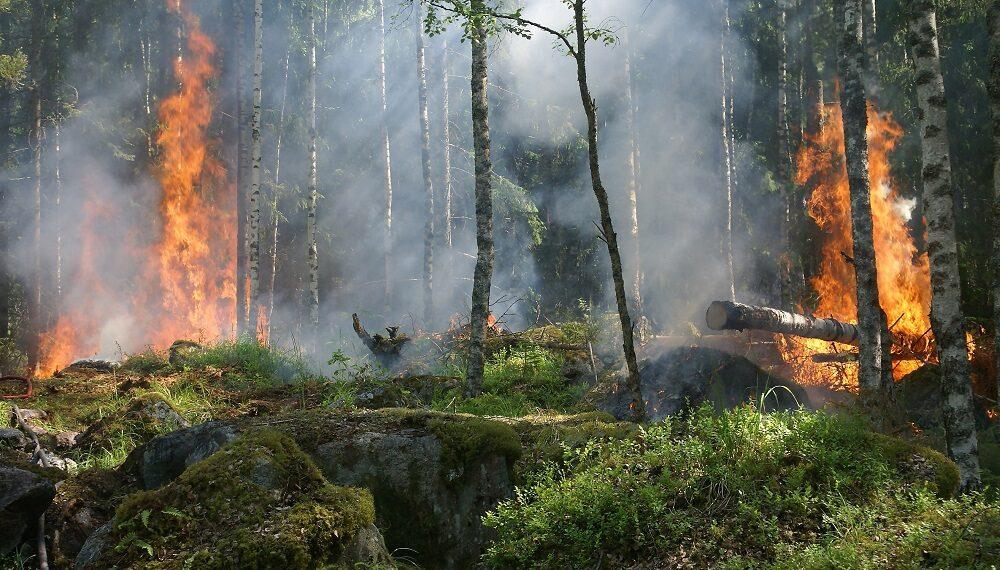 Appello all'UE: proteggete le foreste, non bruciatele per produrre energia