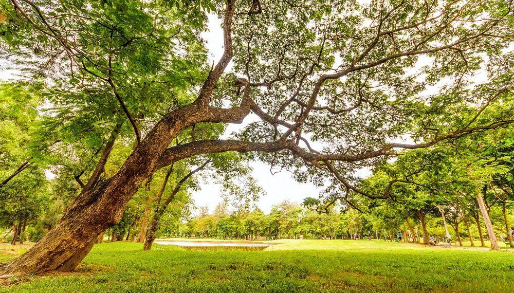 """""""The best practice green"""", la manifestazione di Assoimpredia dedicata all'ambiente"""